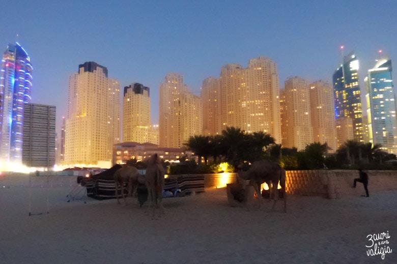 Dubai col pancione - dromedari in spiaggia