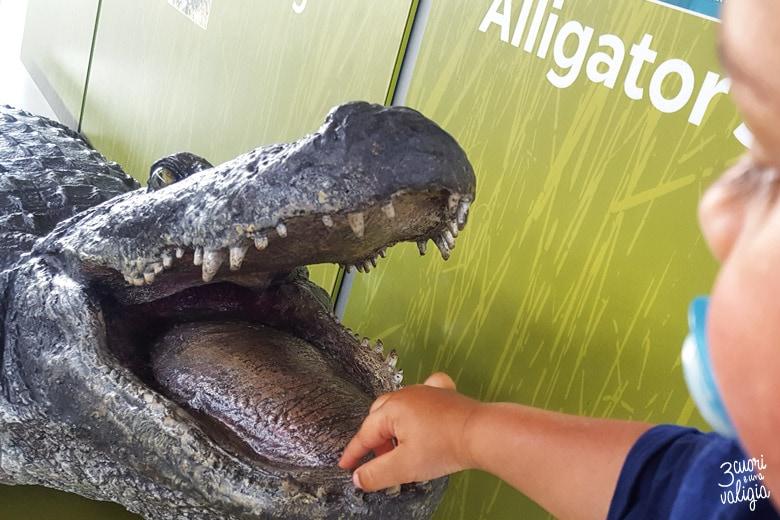 Everglade National Park