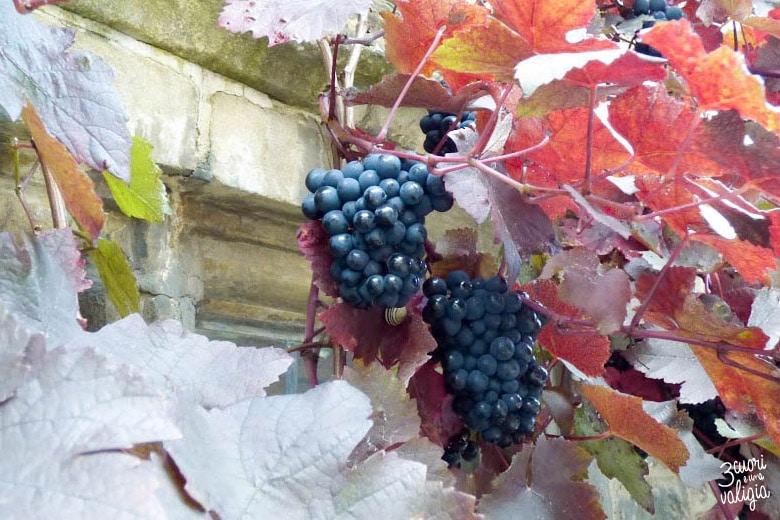 Castle Combe - tralcio d'uva