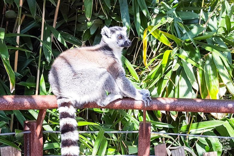 Bioparco Zoom Torino con bambini lemure