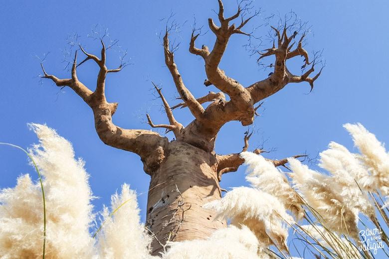 Bioparco Zoom Torino con bambini baobab