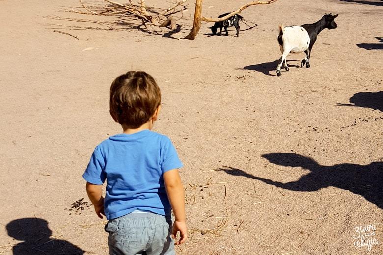 Bioparco Zoom TOrino con bambini capretta
