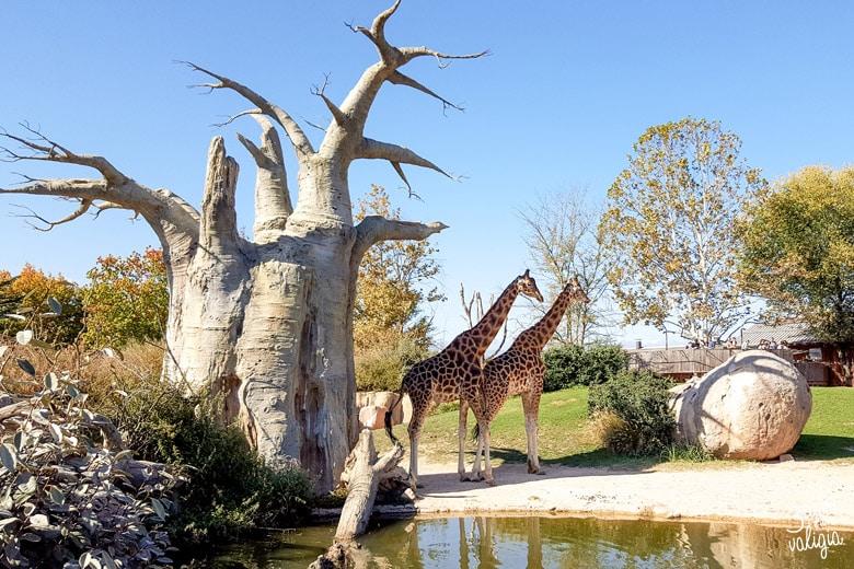 Bioparco Zoom Torino con bambini giraffe