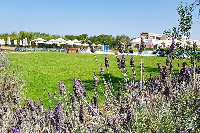 Ugento - Vivosa Apulia resort fiori di lavanda nell'area verde