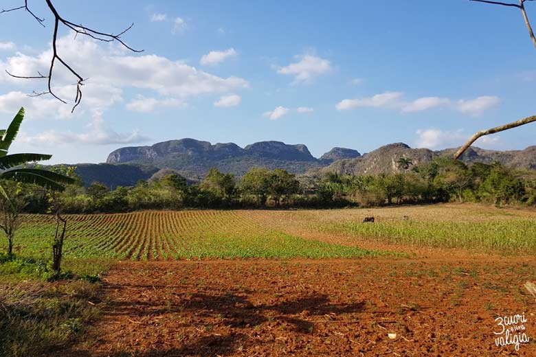 Cuba - Valle Viñales