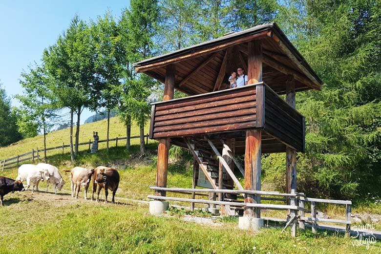 Svizzera - alpe dell'Ochsenberg torre d'osservazione