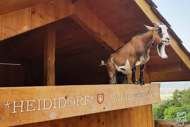 Svizzera - Maienfeld Heididorf recinto caprette