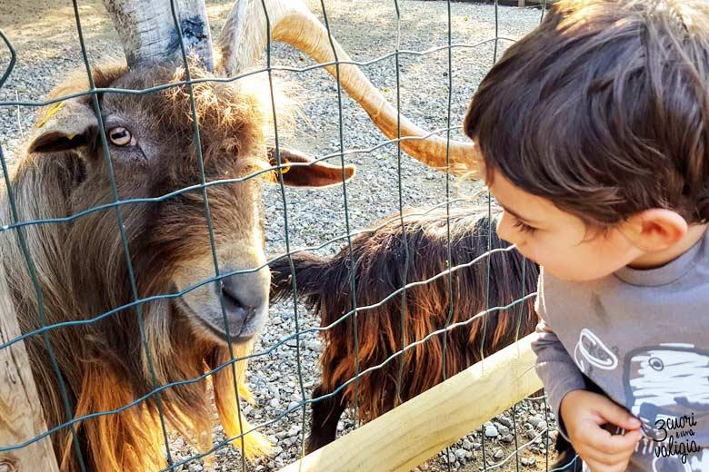 Leolandia con bambini - fattoria