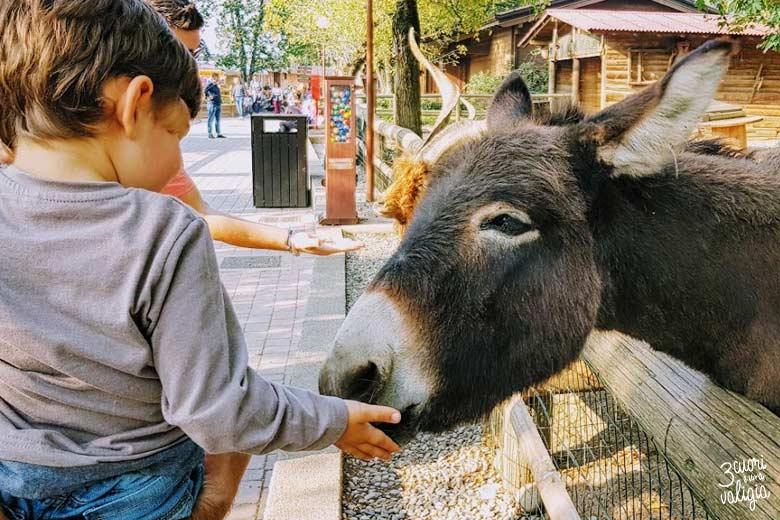 Leolandia con bambini - la fattoria