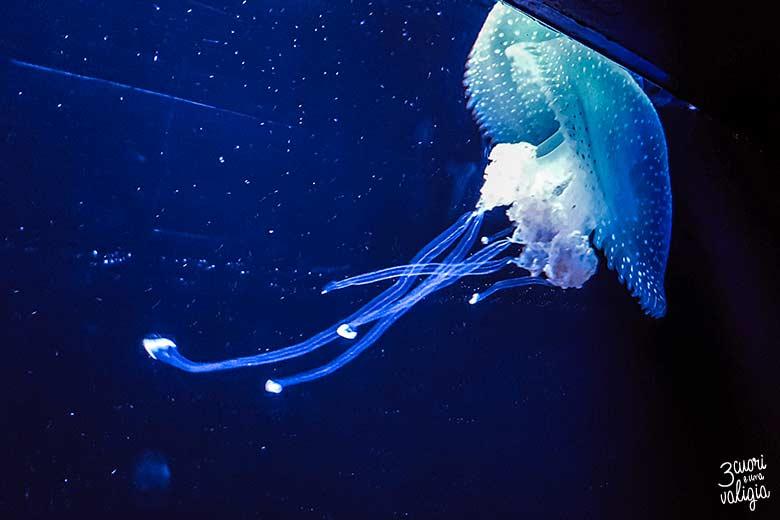 Lisbona con bambini oceanario medusa