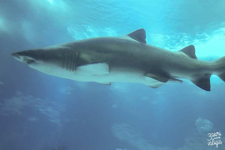 Lisbona con bambini oceanario squalo